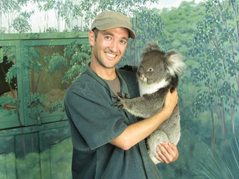 koala huggin 1
