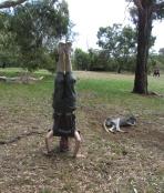 Cleland Wildlife Park Headstand, SA, Australia