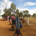 Red Centre Camels Headstand, Alice Springs, NT, Australia