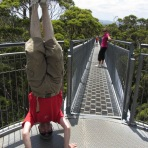Valley Of The Giants Headstand, Walpole, WA, Australia